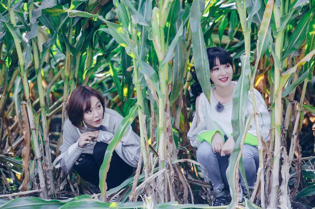 柳岩、姜妍做客《野生厨房》