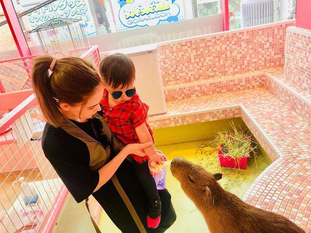 周杰伦一家甜蜜游日本 昆凌抱小小周喂食小水豚