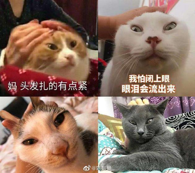 陈都灵晒表情包回应红毯造型惹议:绑太紧头皮疼