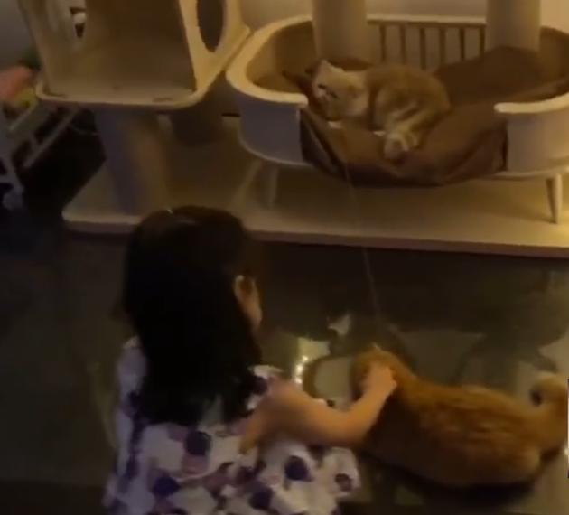 章子怡晒爱猫否认怀孕
