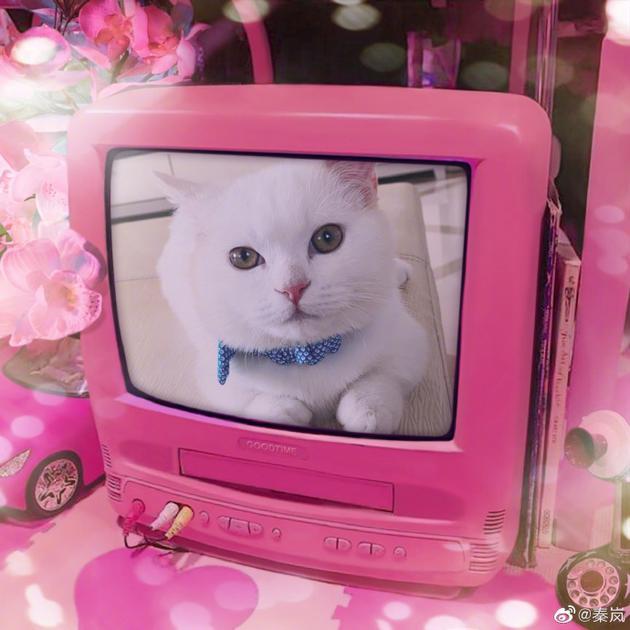 秦岚晒爱猫