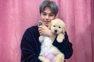 韩国男星被爆料弃养宠物狗 本人发文否认称假消息