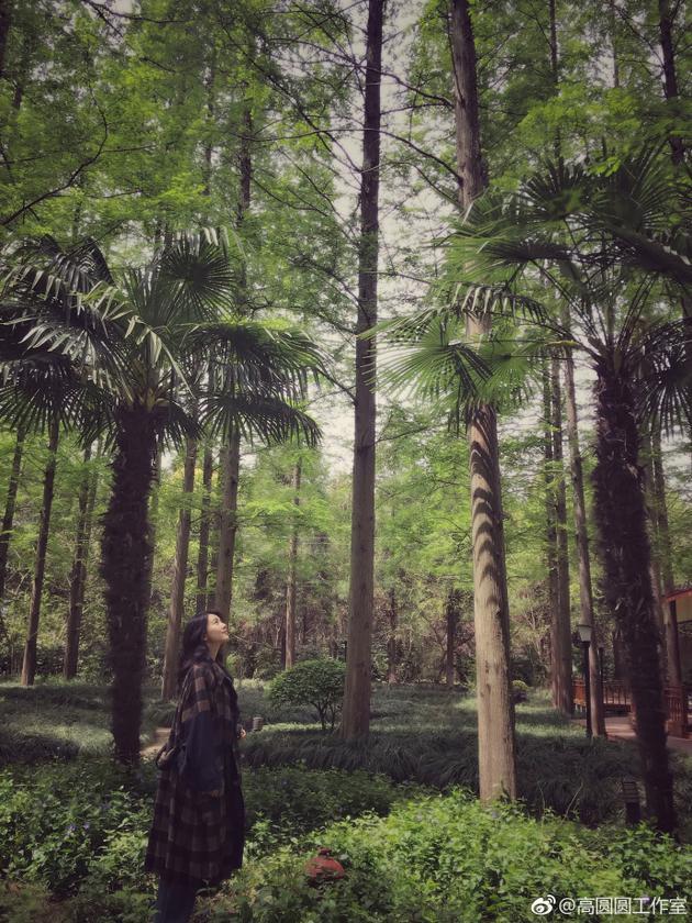 高圆圆漫游森林
