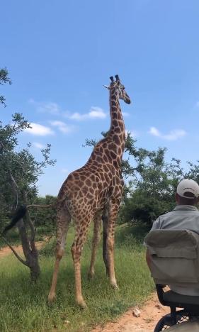 黄渤看长颈鹿
