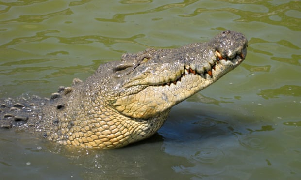 爱马仕将开设最大鳄鱼养殖厂 但遭到动物保护组织抨击