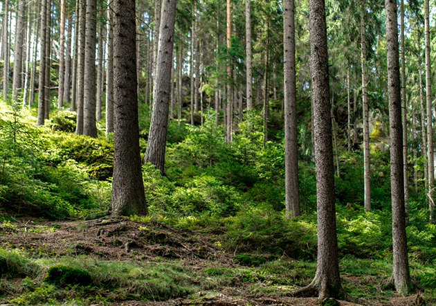 LVMH将斥资500万欧元保护亚马逊雨林生态系统