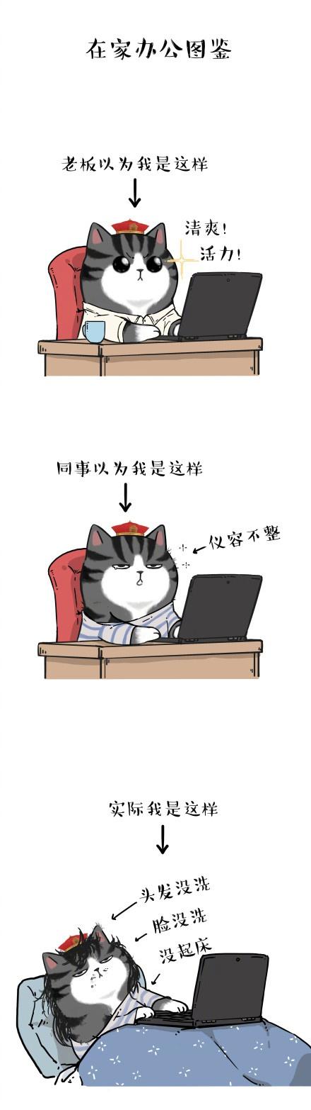 图片来自:@吾皇的白茶 微博