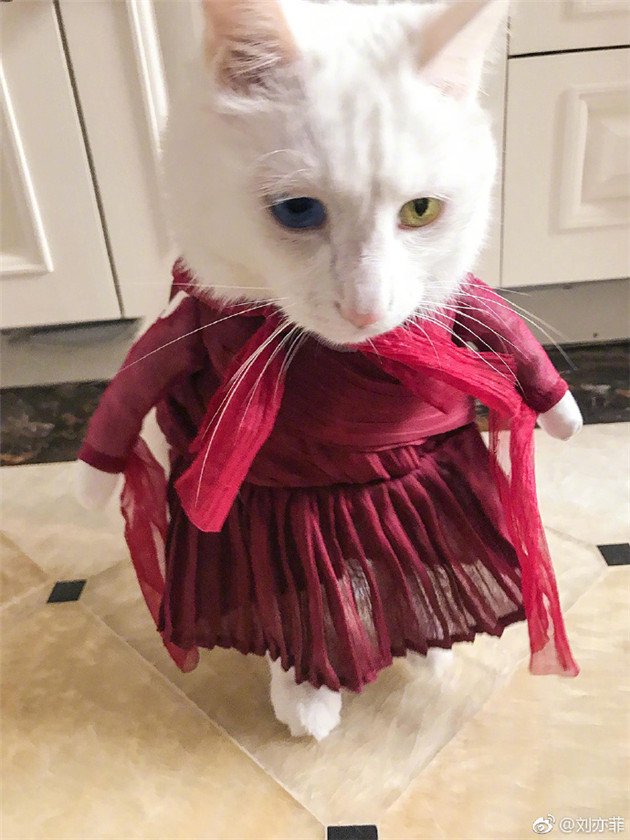 刘亦菲的宠物猫