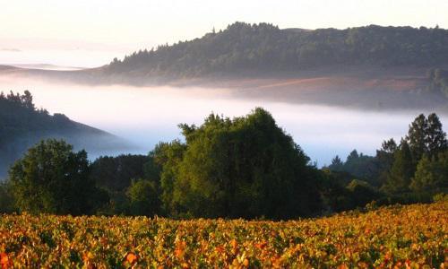 图片来源:discovercaliforniawines.com