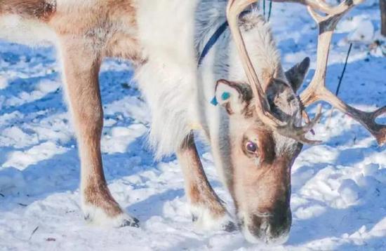 去看雪地上和人们玩成一团的狗子