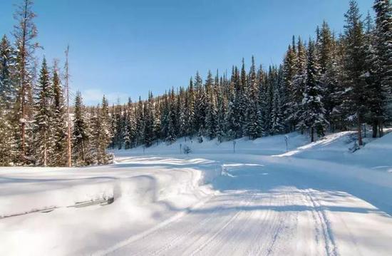 去看明媚的阳光穿过下了雪的森林。