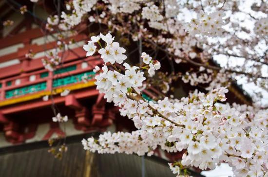 ?Wei Hao sai/Flickr