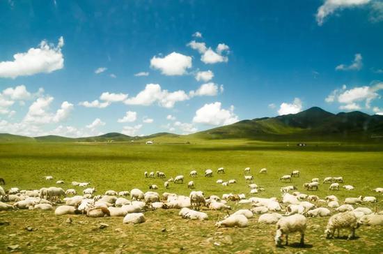 甘川边界的仙境小县 藏着可以叫板呼伦贝尔的大草原