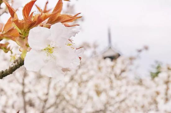 ©Kyoto-Picture/Flickr