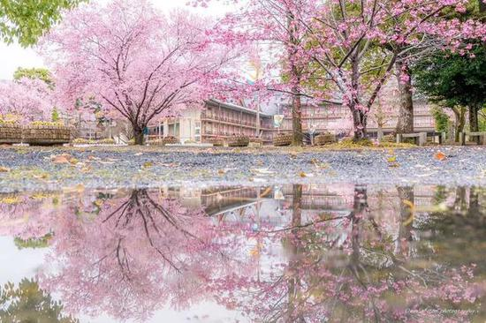 从京都到奈良,时尚新娘寻找樱花之旅