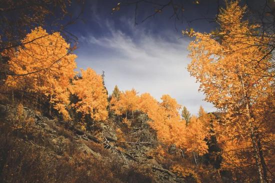 ▲从禾木往黑湖的攀升,景色绝美