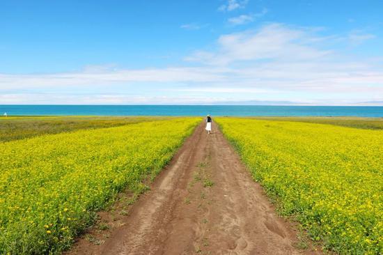 7月的青海湖一半花海一半美女
