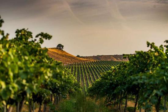 图片来源:winesfromspainusa.com