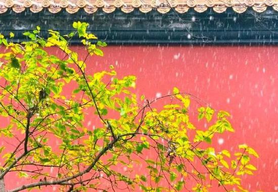 去看引起思乡情的又一年洛阳雪。