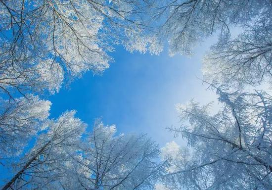 去看千峰万岭,闪耀着一片银光的枯枝。
