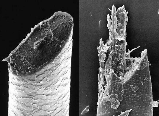 显微镜下胡须的断面图