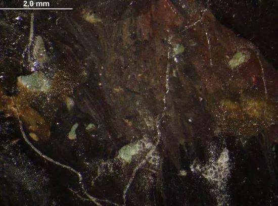 在显微镜下的观察:卡米尔的头发盖住了部分河水。