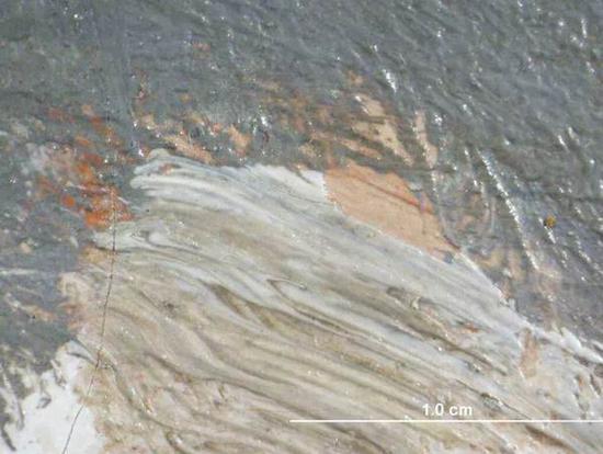 """显微照片显示河水倒影中的""""肤色"""""""