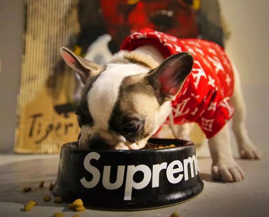 一个正在崛起的时尚领域:你舍得花多少钱给宠物买衣服?