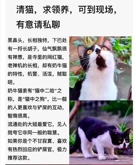 """法源寺真的""""清猫""""了吗"""