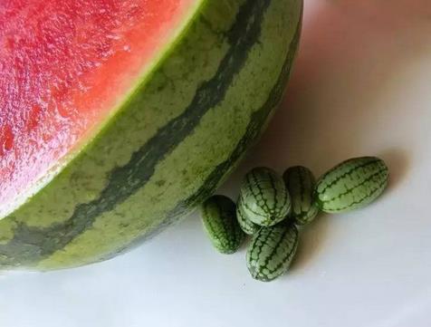 世界上最小的西瓜, 一口3个没问题!