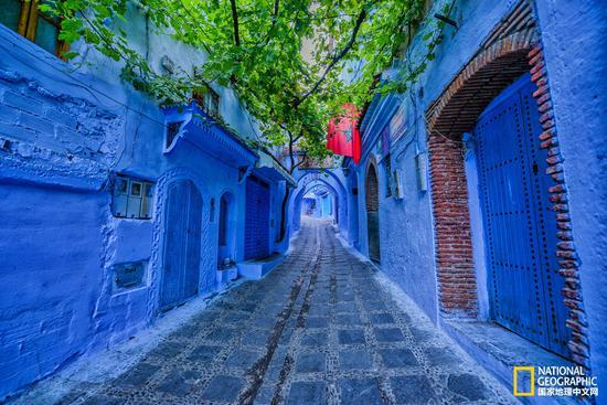 蓝色小巷顶上布满葡萄藤,蓝绿簇拥中,让人的情绪立刻就安静下来。