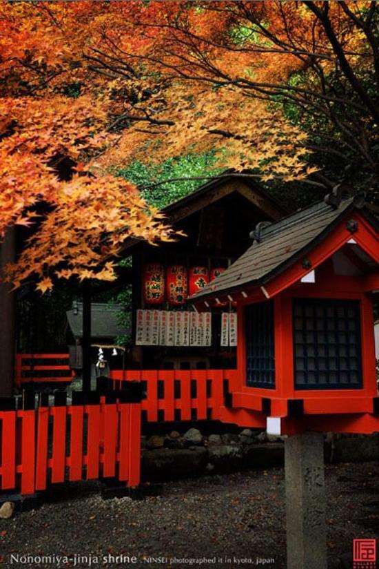 京都野宫神社 图片来源自sincere