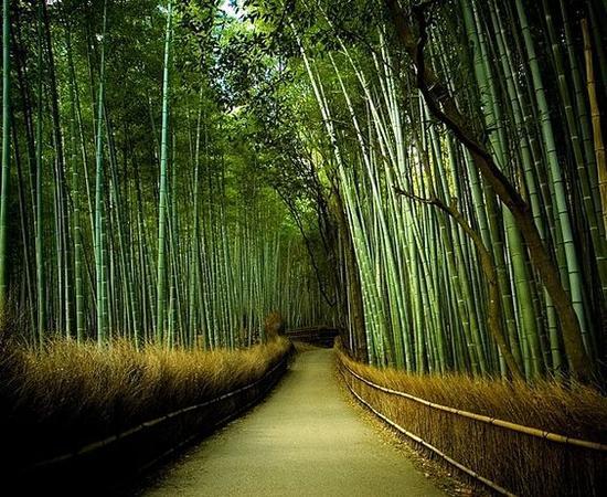 京都野宫神社 图片来源自blueverticalstudio.com