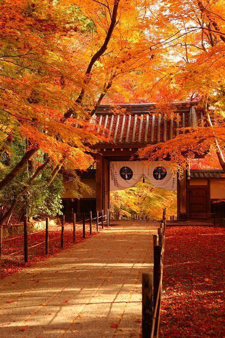 日本寺庙 图片来源自Koichiro Fujino