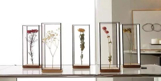 方寸之间的植物