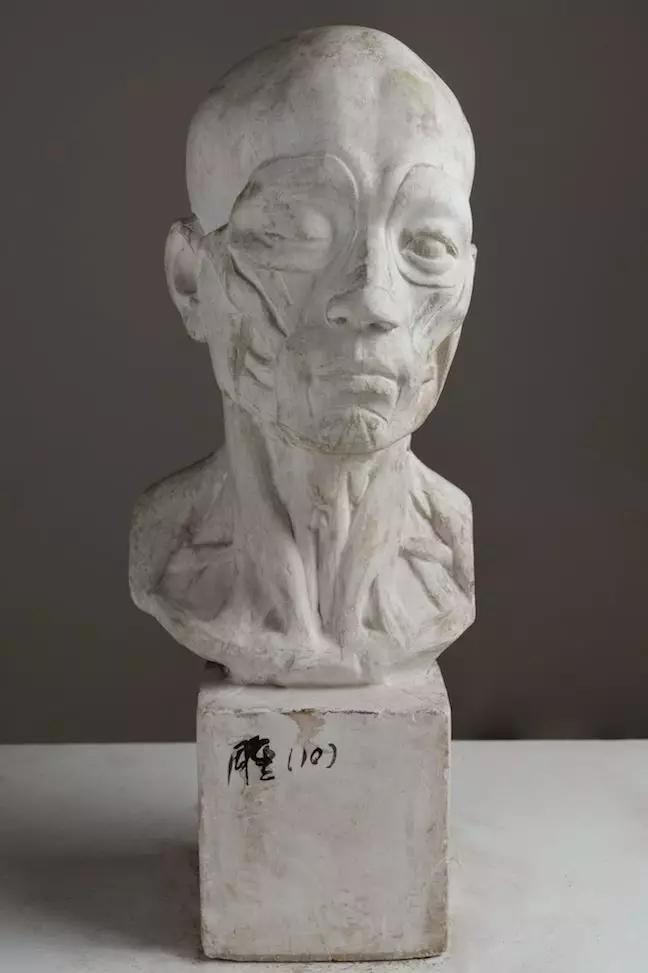 解剖头像 / 叶庆文 / 56 ×23 ×23 cm / 石膏 / 1953