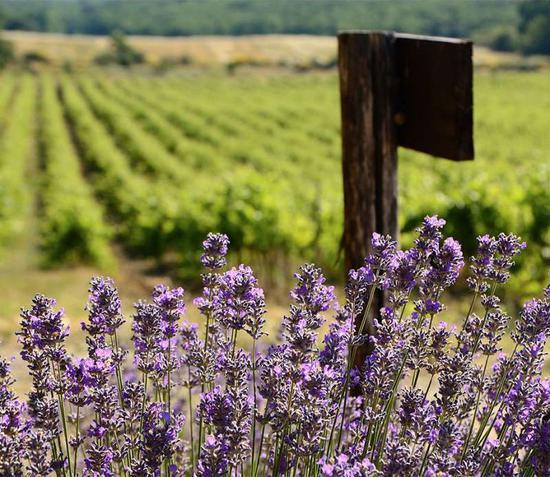 图片来源:winefolly