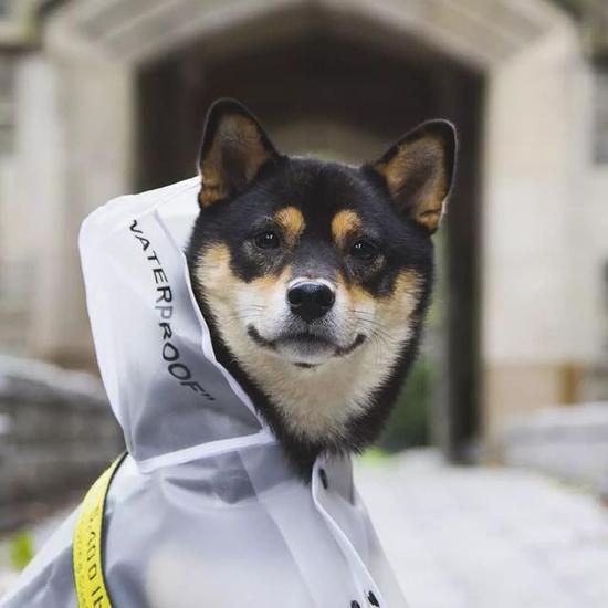 最近小飞龙在网上就发现了三只帅气的潮流狗狗