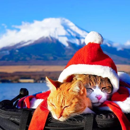 他的工作是带着两只猫旅行 这是什么神仙生活?