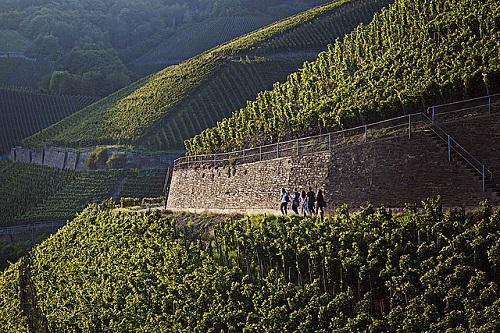 图片来源:www.germanwines.de