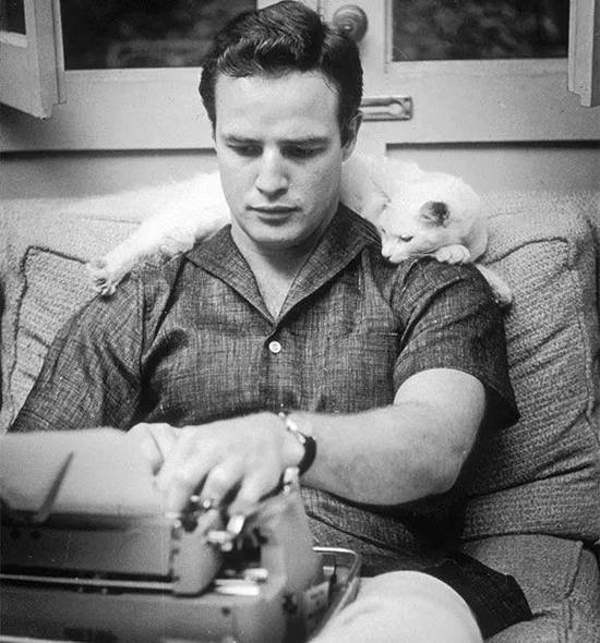 ■马龙老师的短袖衬衫和猫