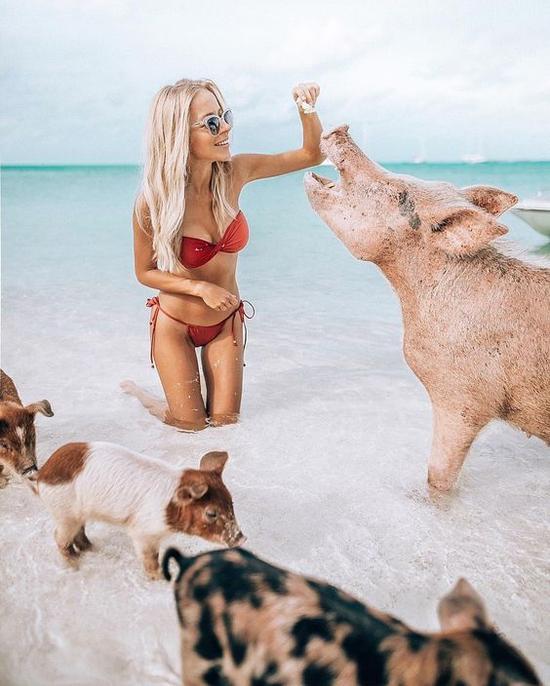 猪岛图片来源自Pinterest@micayla Symington