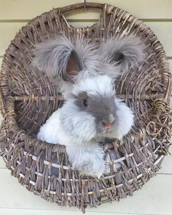兔兔那么可爱 Gucci都不忍心让你穿兔毛了