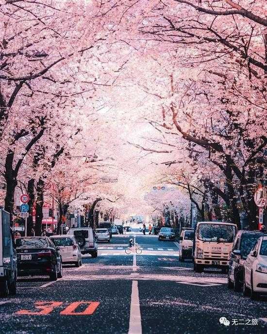 藏在大阪东京的6个小众地 逛街之余就能赏樱