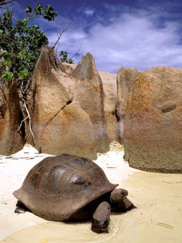 象龟 图片来源自Pinterest@Andrea Griffin