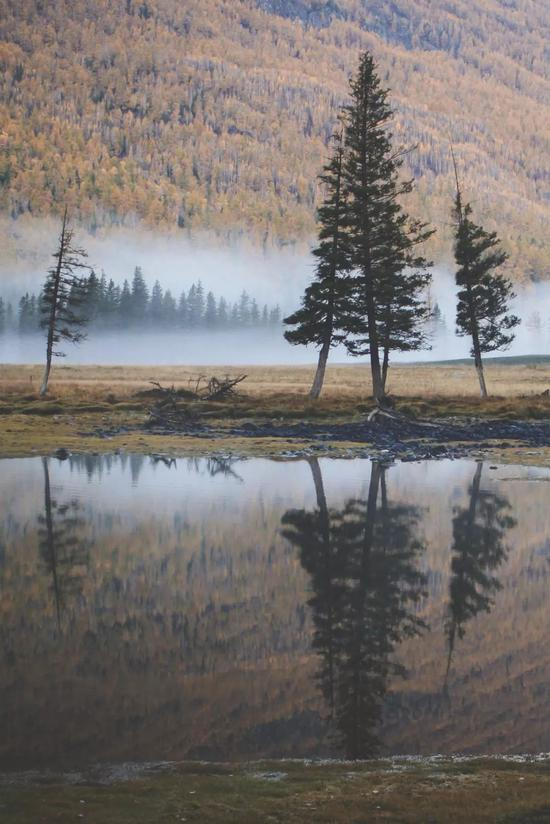 ▲大爱的西伯利亚泰加针叶林,阿尔泰山的独特气质