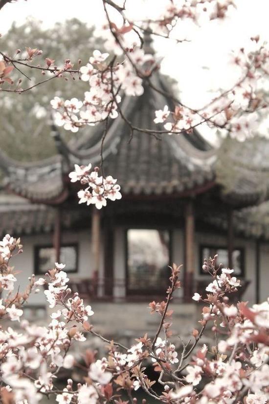 太湖赏樱花 图片来源自PinterestBirhikimse