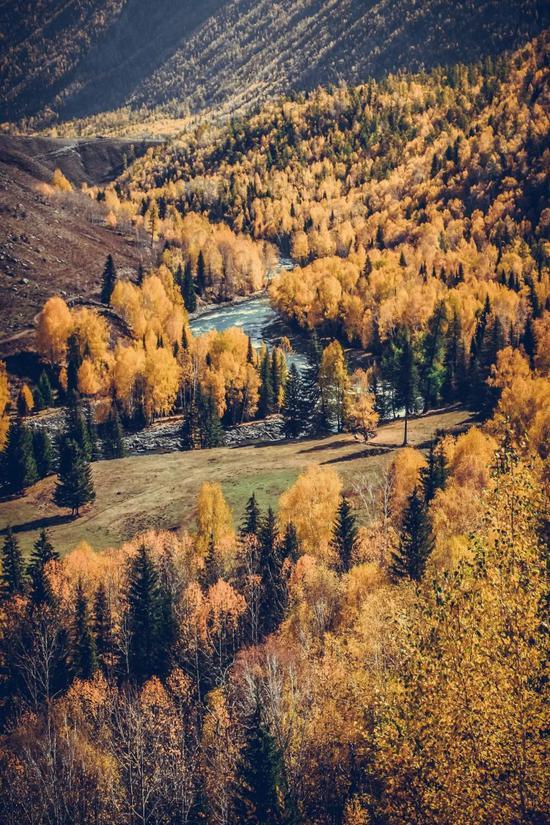 ▲阿尔泰山,这辈子见过的最宏伟的秋色