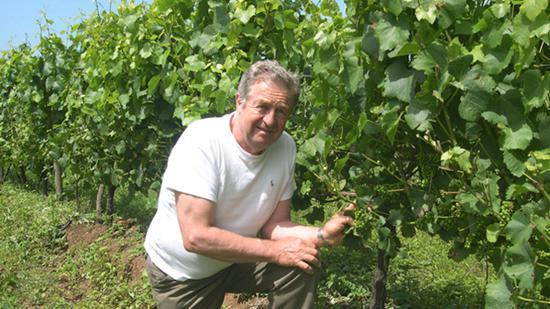 庄主Phillip Jones和黑皮诺葡萄树