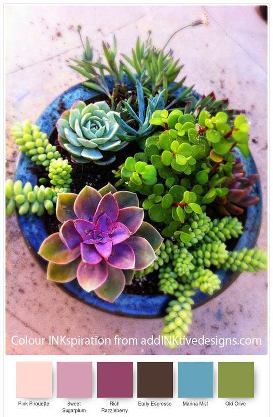 多肉植物 图片来源自Pinterest@Meena Bee